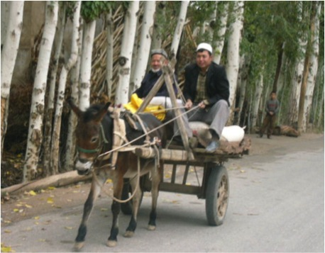 Rural street in a village outside Kashgar, taken October 2010. Donkey-drawn carts are still common in Xinjiang, especially in the countryside